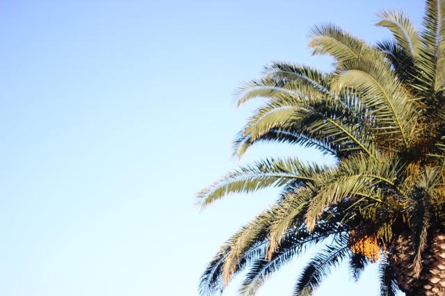 Palms love