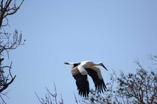 storks3