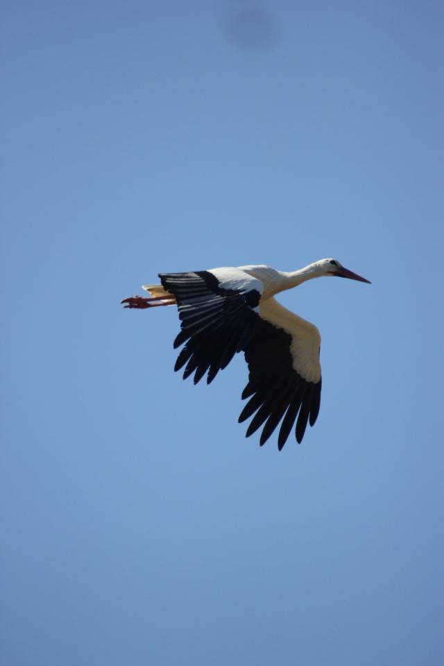 storks5