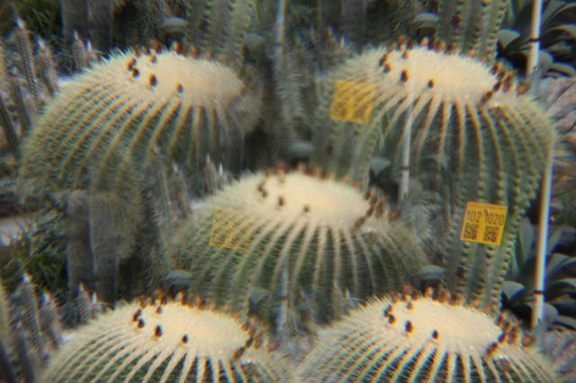 kaleidoscactus